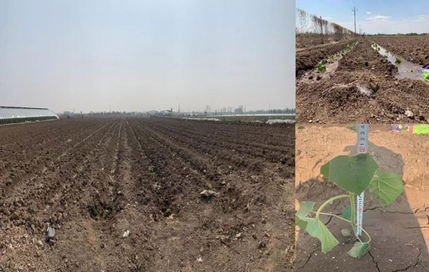 农林种植成苗生长情况